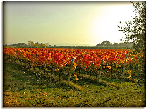 "Here it produces the best white wine in the Marche - the ""Verdicchio"" (Explore Nov. 15/2011)"