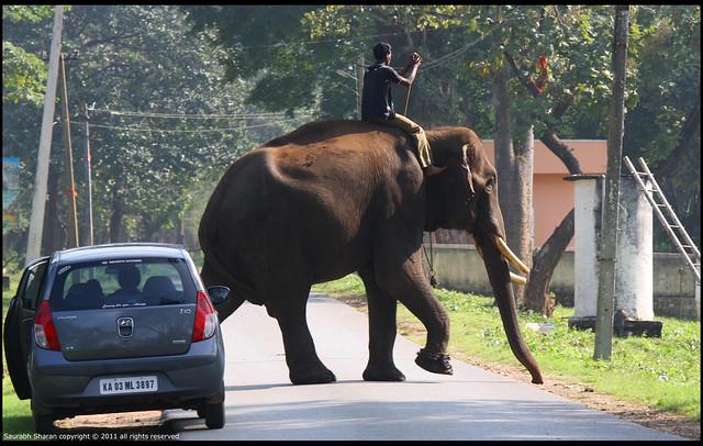 Balle Elephant Camp