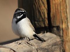 Albuquerque Foothills Wildlife
