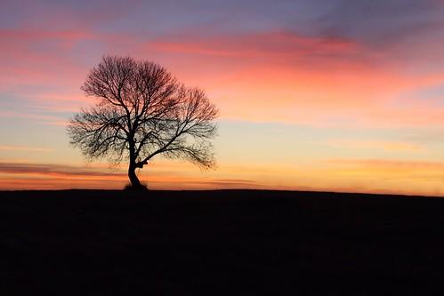 thanksgiving morning pink blue sky black tree silhouette clouds southdakota sunrise landscape purple hill explore lonetree givethanks fotocompetitionbronze fotocompetitionsilver fotocompetitiongold rochester52weeks11