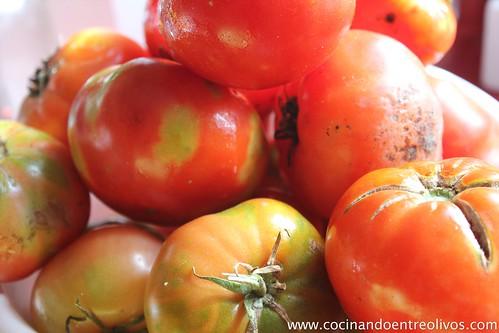 Tomate frito (4)