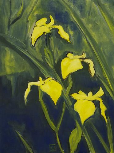Res botanica #8 (Iridaceae)
