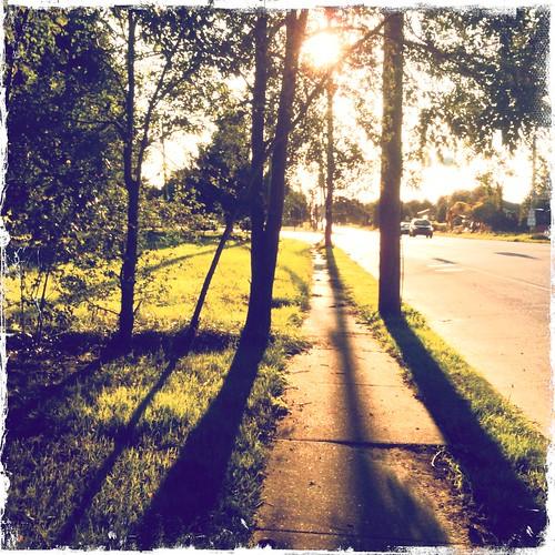 street trees sunset sunlight grass shadows sunny sidewalk iphone hipstamatic
