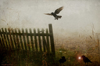 Light of the Raven