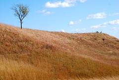 soil(0.0), mountain(0.0), dirt road(0.0), plain(0.0), ridge(0.0), plateau(0.0), terrain(0.0), badlands(0.0), prairie(1.0), steppe(1.0), field(1.0), grass(1.0), tree(1.0), mound(1.0), hill(1.0), geology(1.0), natural environment(1.0), meadow(1.0), landscape(1.0), wilderness(1.0), rural area(1.0), savanna(1.0), grassland(1.0), mountainous landforms(1.0),