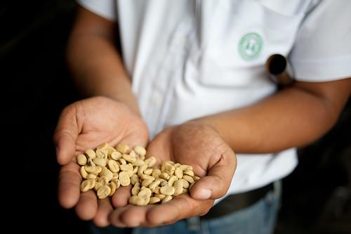 coffee bean elsalvador santaana coe