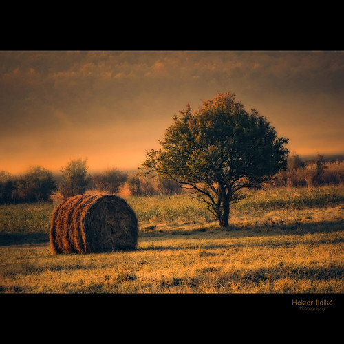 hungary természet fa táj köd tájkép ősz reggel napfelkelte canonsx10 mygearandme ringexcellence