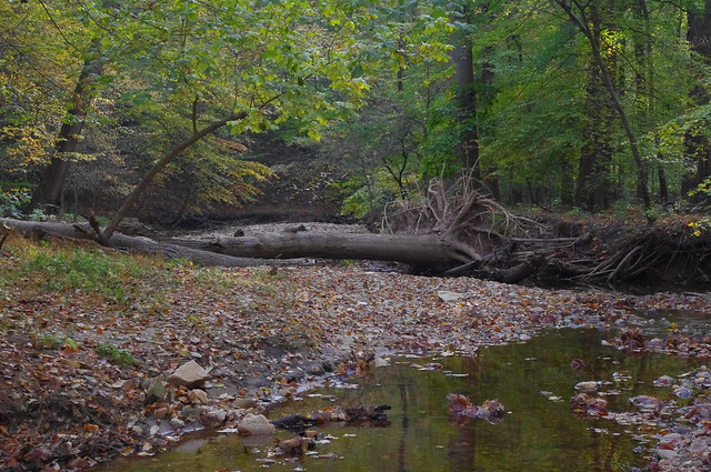 Pinehurst streambed in Rock Creek Park