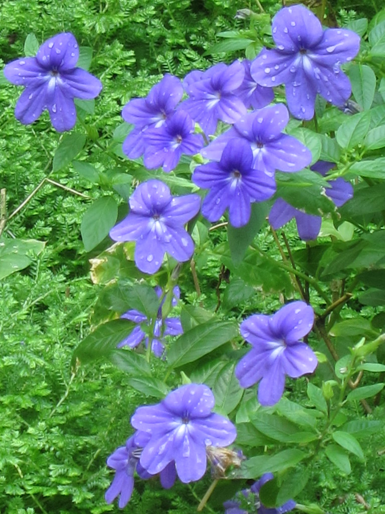 IMG_1118紫水晶花