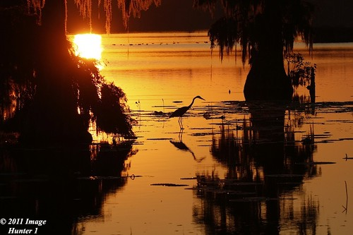 Great Blue Heron / Sunset - Lake Martin, Louisiana