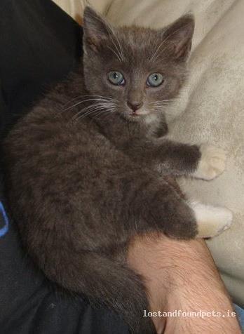 Tue, Nov 1st, 2011 Lost Female Cat - The Local Area, Kilmihil, Clare