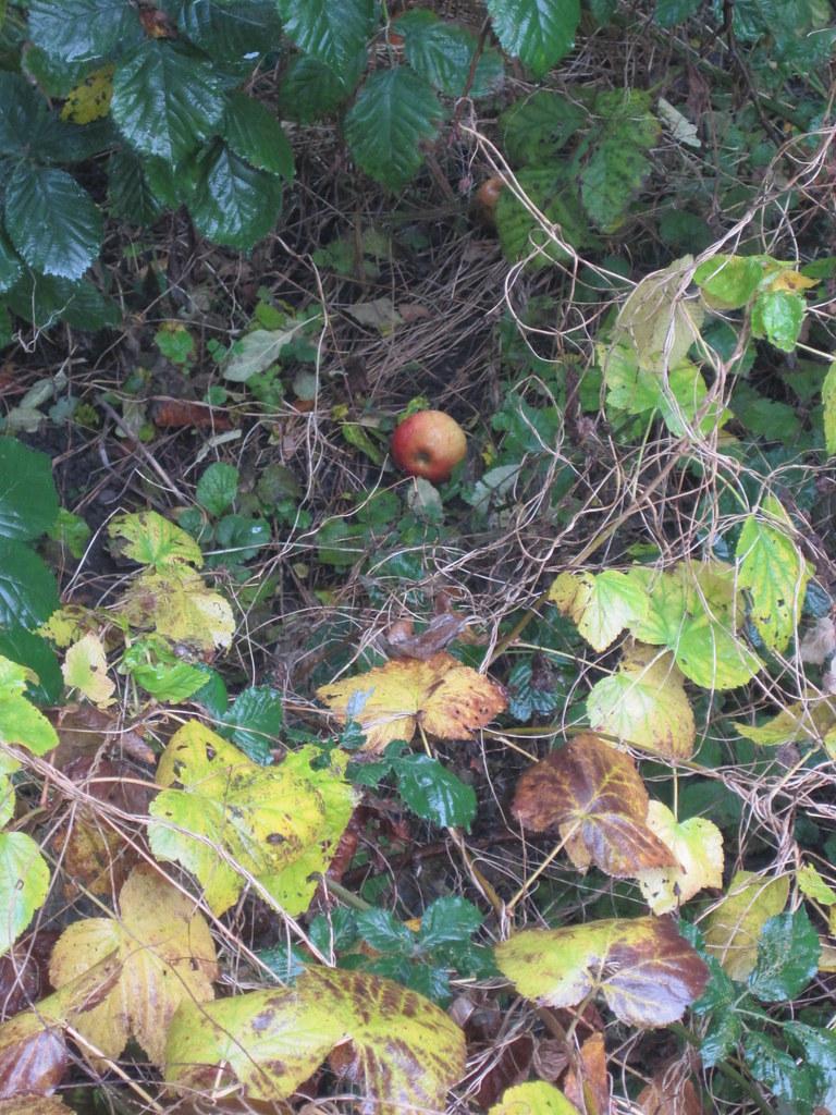 Verwilderter Garten 2 Anna Maria Flickr