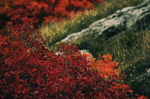 red grass war pentax stones guerra sumac erba pietre karst rosso carso sommacco pentaxk20d pentaxk20 monteseibusi