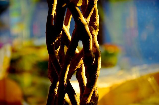 Branches enlacées