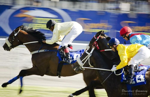 What to do in Mauritius - bet on horses at the Champ-de-Mars race track.