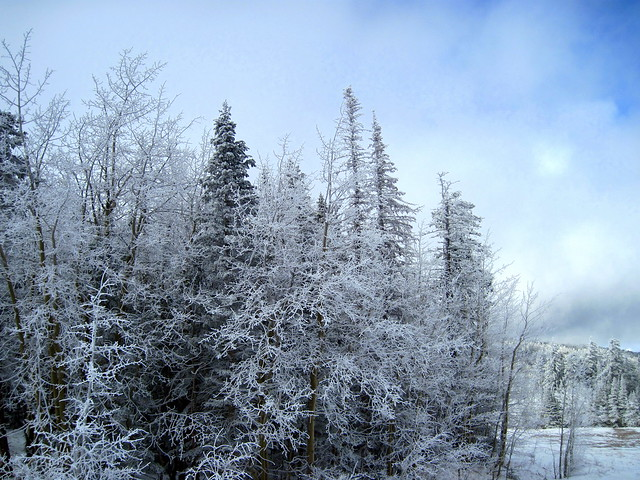 Hoar frost at Ellis Trailhead 20111114