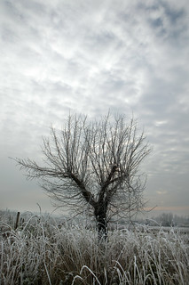 Lonely Bordeaux Tree In Winter 06
