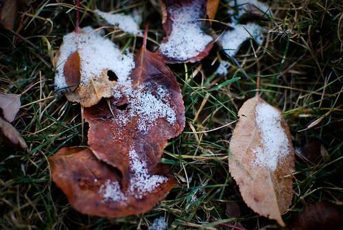 november 19 :: habit