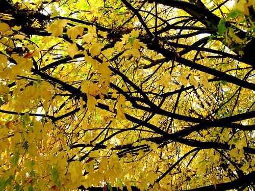 Autumn Amarillo