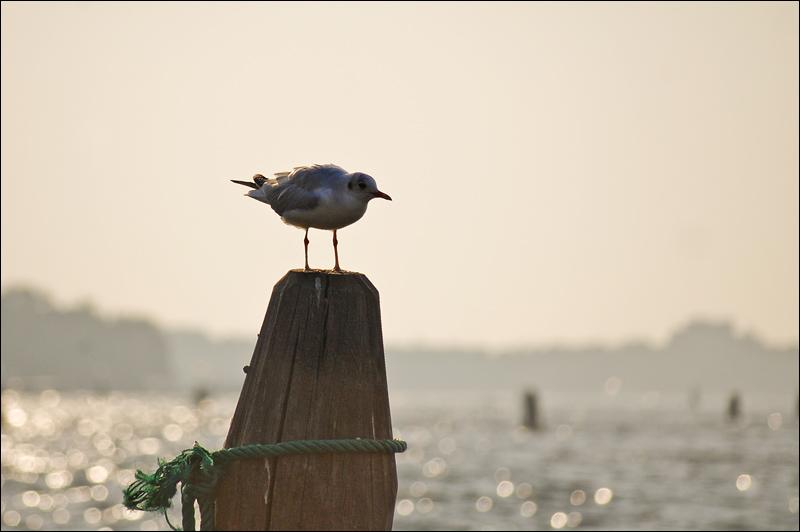 Venezia_0976