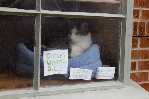 Occupy Window Sill (OWS)