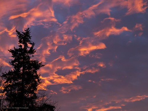 november sunset sky tree clouds oregon fire duck guess olympus imagination salem e5