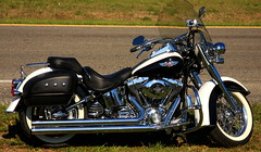 Softail Deluxe Beauty