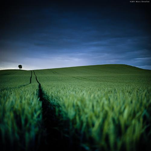 color green 6x6 film nature field zeiss square switzerland focus suisse kodak vert line epson mf portra couleur champ ligne carré planar vaud portra160nc hasselblad500cm 160nc v700 vuescan epsonv700 netteté epsonperfectionv700 planar2880mm marcottolini