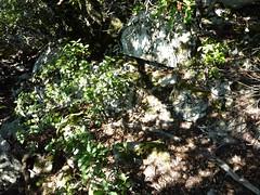 Pointe du Castellucciu di A Tia : le versant Ouest de la pointe avec des restes de muret de soutènement
