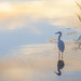 Egret Sunrise scenic DSC8698 by Gitart