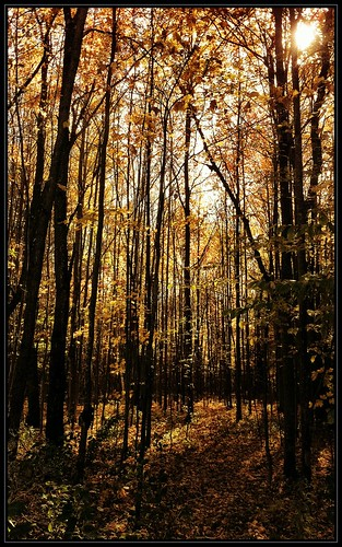 fall mobile woods vermont foliage randolph iphone