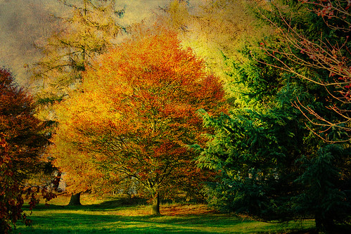 Castle Howard arboretum. Autumn!