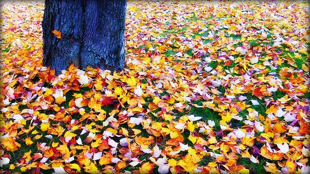Autumn Leaves