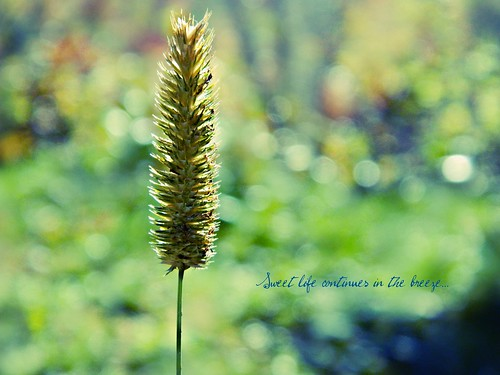 """Sweet life continues in the breeze, in the golden fields..."" ~ Jack Kerouac"
