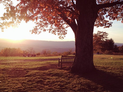 autumn sunset orange tree fall nature leaves iphoneography iphone4s
