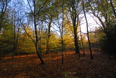 Epping Forest Autumn 2011