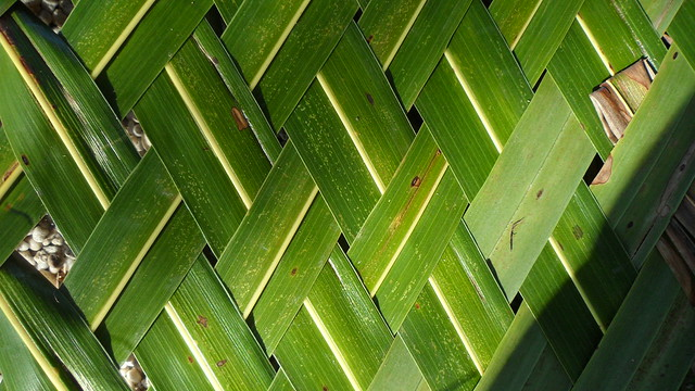 How To Weave A Coconut Leaf Basket : Weave pattern with coconut leaves flickr photo sharing