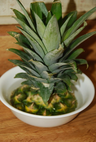 How to grow a pineapple plant life made full for How to plant a pineapple top in a pot