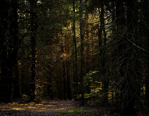 autumn light fall forest dark vignetting pinetrees hugin stateforest oakleycorners