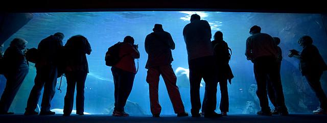 Fish Tank (Georgia Aquarium)