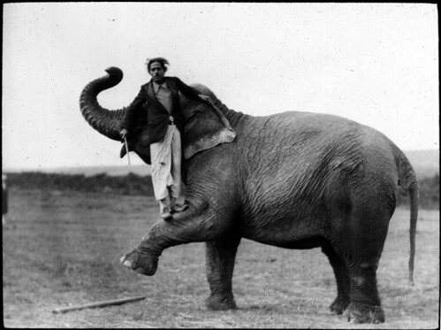 Man standing on elephant leg