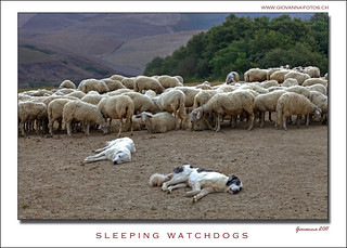 sleepping watchdogs - cani da guardia addormentati...