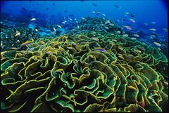tropics(0.0), shoal(0.0), coral reef(1.0), coral(1.0), coral reef fish(1.0), sea(1.0), organism(1.0), ocean(1.0), marine biology(1.0), invertebrate(1.0), stony coral(1.0), natural environment(1.0), underwater(1.0), reef(1.0),