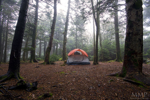 camping trees mist weather fog forest woods tent adventure appalachiantrail outdooractivity roanhighknob