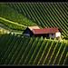 (743)  Green Styria by Franz St.