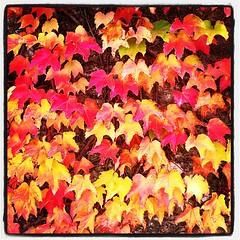 Patchwork de couleurs d'automne