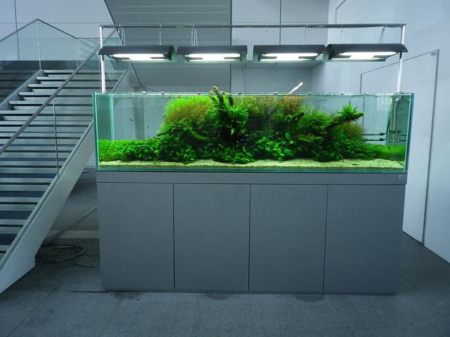 Ada Aquarium : ADA Nature Aquarium Flickr - Photo Sharing!