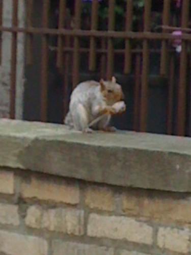 spoon squirrel