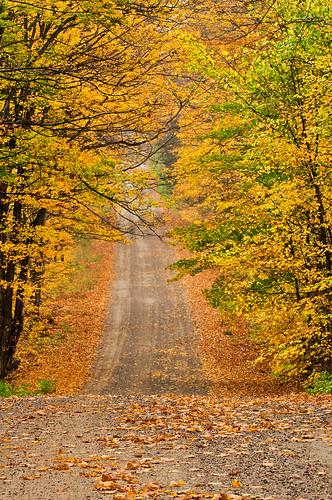autumn ontario colour leaves rain forest landscape hill canopy soo gravel northernontario fallcolours iline stjosephisland stjosephtownship