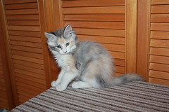 Enya (born 13/08/2011)
